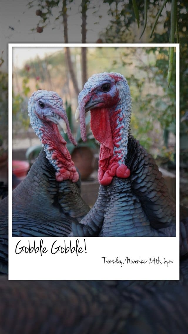 Text Message Invite Designs for Gobble Gobble Get Together